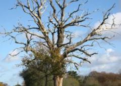 Brad's Stump & Tree Service
