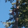 A&N QUALITY TREE SERVICE