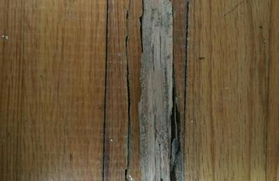 1st Solution Pest Control - Miami, FL. Subterranean termite damage