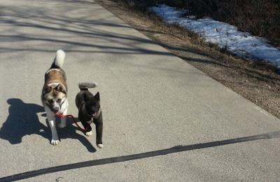 Crystal's Dog Training N Boarding - Appleton, WI