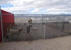 Risen Star Kennel Inc - Bullhead City, AZ