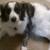Indigo Rescue-Animal Rescue Consultation