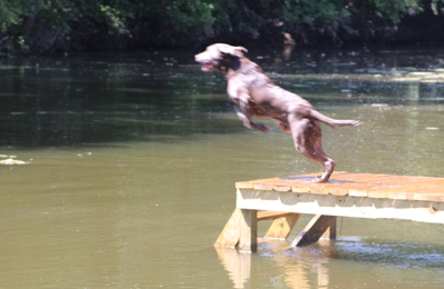 Southern Made Retrievers - Gonzales, TX