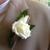 Divine Flowers & More