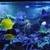 Neptune's Reef