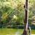ArborTECH Tree Removal & Preservation