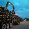 Trombley Logging LLC