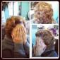 Professional Hair Designs - Memphis, TN