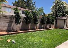 Green America Tree & Landscaping - Las Vegas, NV