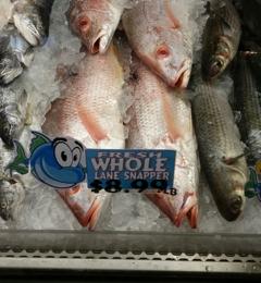 Delaware Chicken Farm - Hollywood, FL. Fresh whole lane snapper @ 8.99 lb