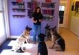 Pet Degree Dog Training Center - Trumbull, CT