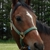 Timber Ridge Equestrian Center