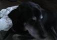 Midstate Veterinary Services - Cortland, NY