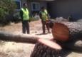 Procopio's Tree Service - San Jose, CA