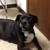 Osage Veterinary Clinic