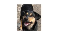 Anderson Township Family Pet Center - Cincinnati, OH