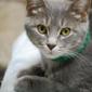 Cat Welfare Assn Inc The - Columbus, OH