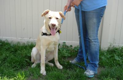 Dakin Humane Society - Leverett, MA