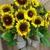 Flowers By Peter Perkens