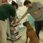 Greenfield Animal Hospital - Miami, FL