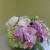 Ideal Orchids - Palm Beach Premium Orchid Florist