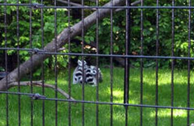 Fort Wayne Children's Zoo - Fort Wayne, IN
