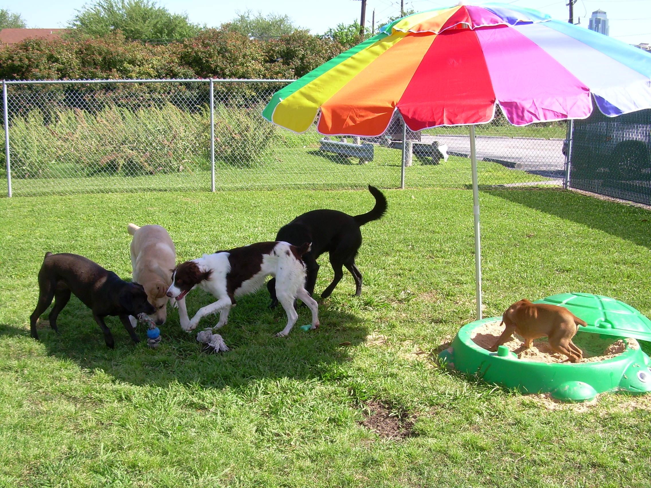 Best Friends Pet Care Houston TX YP