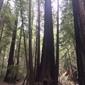 Big Basin Redwoods State Park - Boulder Creek, CA