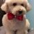 Julie's Pet Salon, LLC