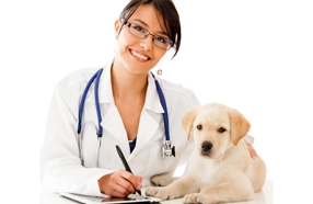 Top-Rated Veterinarians in Greater Sacramento