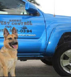 Andre Pest Control - Hollywood, FL
