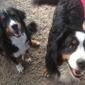 Dusty Dog Ranch Critter Care - Santa Fe, NM