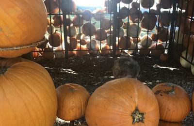 Cheekwood-Botanical Garden & Museum of Art - Nashville, TN. Pumpkin house