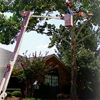 LeBlanc's Tree & Stump Removal Inc