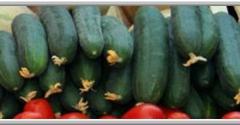 Dutch Village Farmers Market - Upper Marlboro, MD