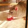 Arizona Exotic Animal Hospital - Mesa, AZ. This is Tucker, before being seen.