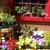 El Jardin Flowers and Garden Room