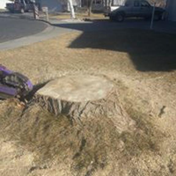 Montana Tree Care - Billings, MT