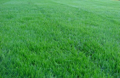 More Green For Less Green Lawn Care Inc. - Charlotte, NC