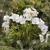 Stalk Market Fine Silk Florals The