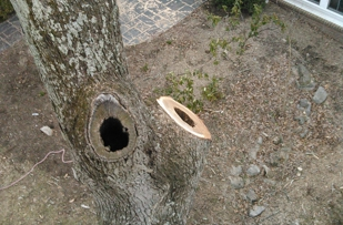The tree by your house could be structurally deficient. Have William Tuckwiller check it out.