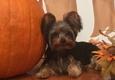 Black Tie & Tails - Hiawassee, GA. Mr Chewie