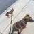 Snaggle Foot Dog Walks and Pet Care