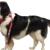 Aranda Dog Training - CLOSED