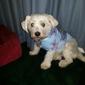 Petco - Huntington Park, CA. Max loves Petco!