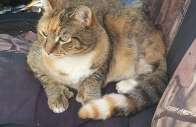 Fox Nest Veterinary Hospital - Seneca, SC. PurrDee... Our female Polydactyl Cat.. Notice her thumbs? She receives the best care attention from FoxNest...����