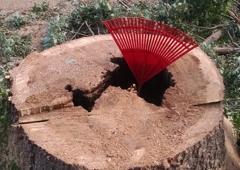 Cutting Edge Tree Service - Norfolk, VA