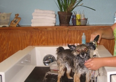Barkleys do it yourself dog wash professional groom spa 524 barkleys do it yourself dog wash professional groom spa north palm beach solutioingenieria Gallery