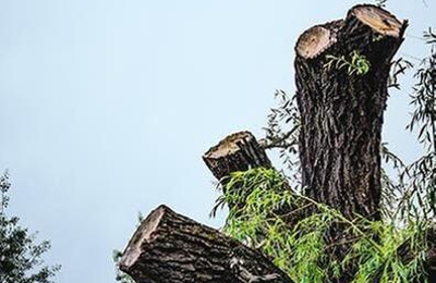 Houston Tree Service Team