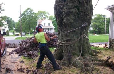 All Season Tree Service - Stoughton, MA